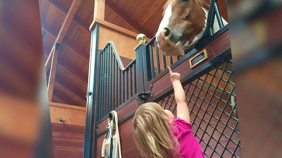 Terra De Belos Cavalos | Promo