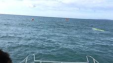 NAUTICA.PRO Botes de rescate y Embarcaciones de Supervivencia Curso profesional