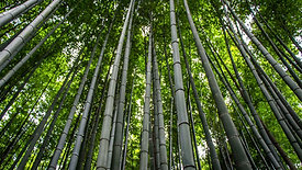 Bamboo Course Video