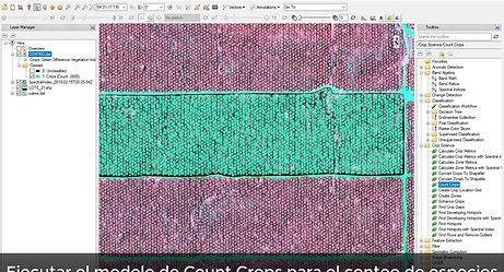 Agricultura de Precision con ENVI CropScience en cultivos de Palma aceitera Africana