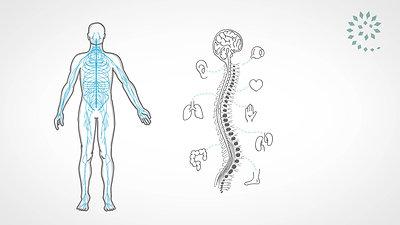 Wir lieben Chiropraktik