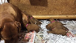 Tilly and Puppies  (3)