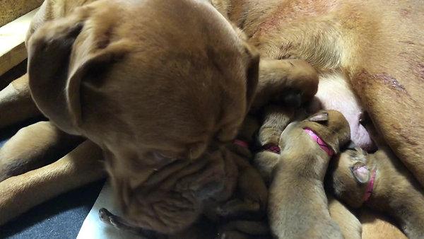 Tilly nursing her girls