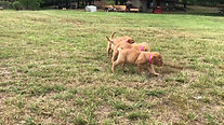 the girls playing