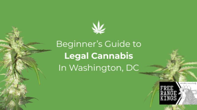 Beginners Guide to Legal Cannabis in Washington DC