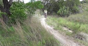 Dirt Bikes _3