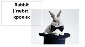 Животные на английском языке