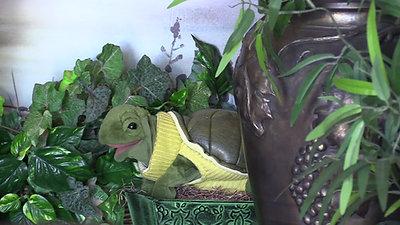 Mertyl The Turtle