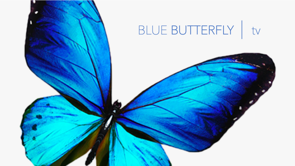 BLUE BUTTERFLY  |  tv