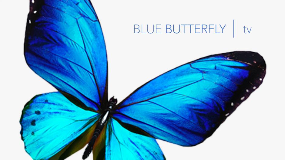 BLUE BUTTERFLY     tv