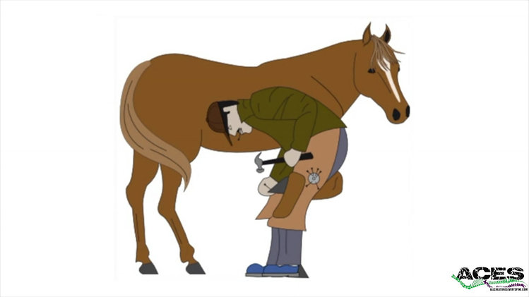 Equine Chiropractic by ACES