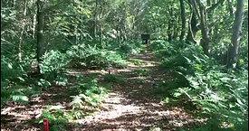 Forest Spirit Archers Bottom Course