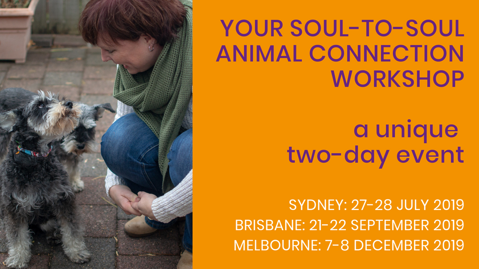 Your Soul-to-Soul Animal Connection Workshop Invitation by Bianca de Reus, founder & CEO Connecting Soul Beings Institute.