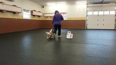 Small Dog Card 25