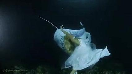 hannah mermaid mermates international convention merconvention belgium 2019