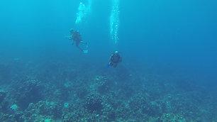 Deep Blue Sea in Cayman Islands