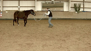 Verschieben der Körperzonen des Pferdes