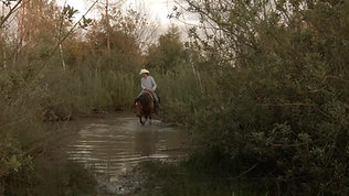 DVD Mustang Kapitel