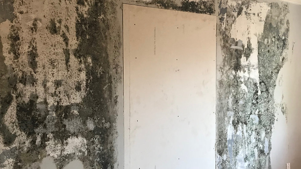 How To Remove Moldy Drywall Safely