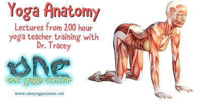 Yoga Anatomy Lesson pt.3