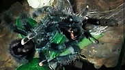 Avicularia avicularia (Common Pinktoe)