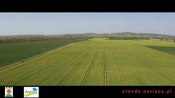 Arenda autoryzowany dystrybutor nasion rzepaku