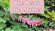 The Heart of A Mother