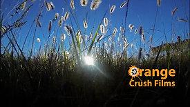Orange Crush Films Show Reel