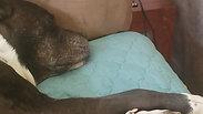 Shadow Sleep Bark