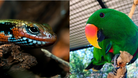 Emergency Care of Birds and Reptiles