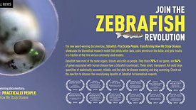 Zebra Fish Film