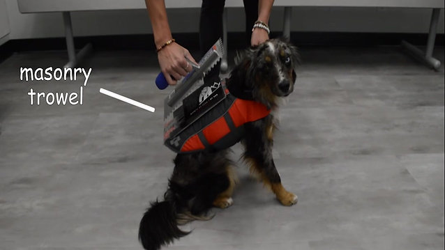 Can a Bear Trap BT900 Magnetic Oil Filter lift a dog?