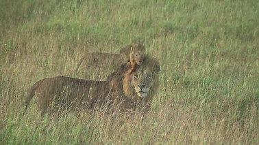 Havasi African Safari - Tanzania, Central Serengeti