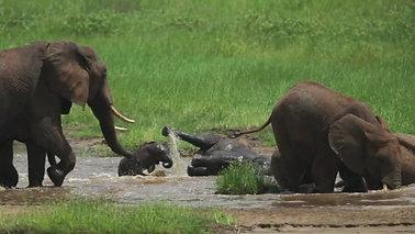 Havasi Tanzanian Safari - USA, Arusha, Tarangire