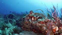 Experience World Class Diving and Snorkeling 60 You Tube less chroma
