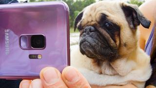 Samsung x Dodo