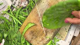 Site-Suitable Food Plants