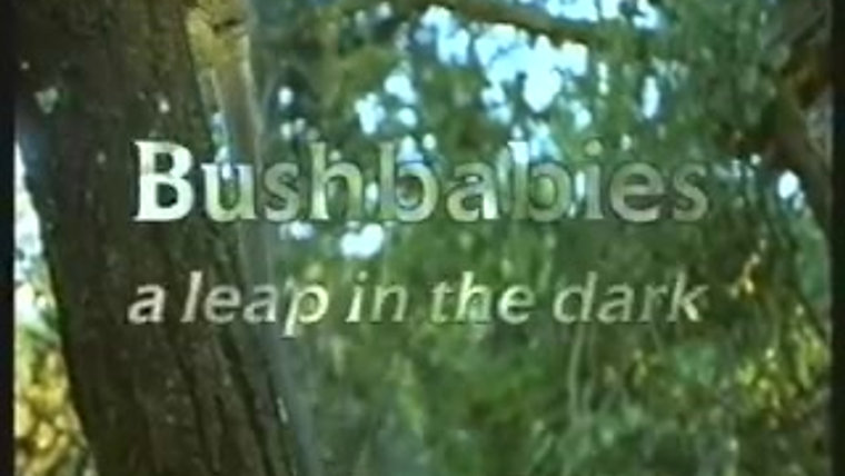 Bushbabies