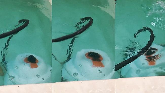Service diagnostic et réparation : Robot nettoyeur de piscine