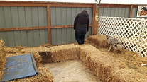 Barn Hunt Practice