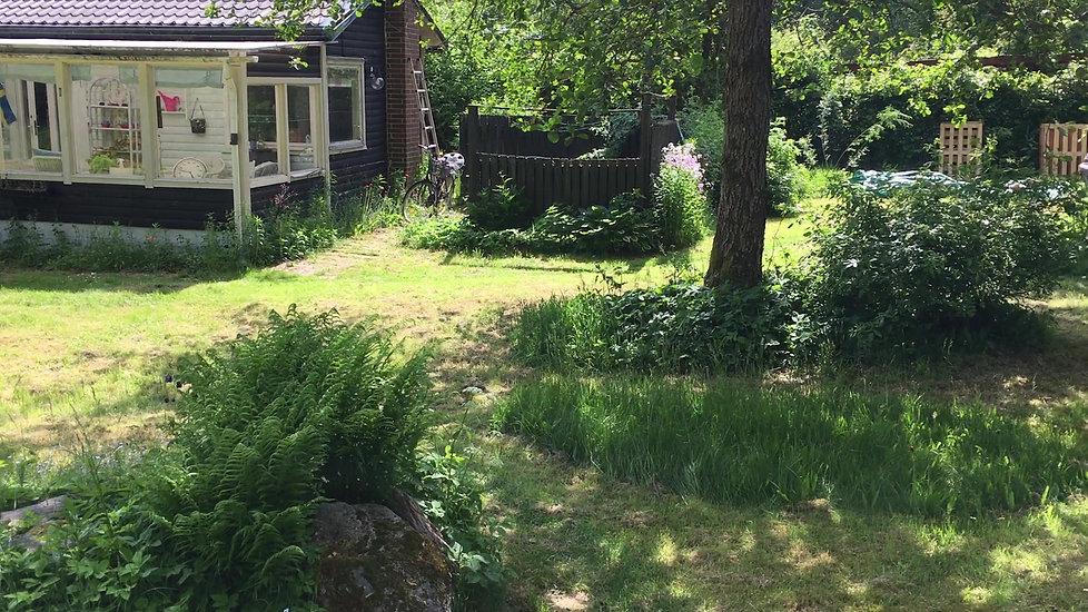 Garden at Little Homeward