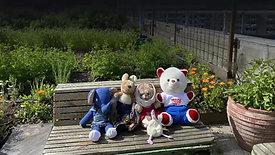 The Teddy Bear Hostel