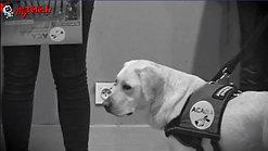 ACADIA - Remise des chiens Promotion 2019