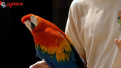 Robin et Nina, le perroquet, vous attendent à la réouverture du Jardin Aux Oiseaux Zoo d'Upie !