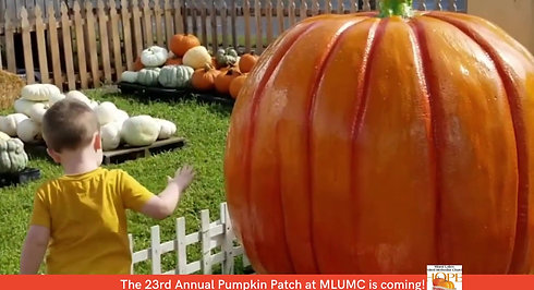 The Pumpkin Patch is coming!