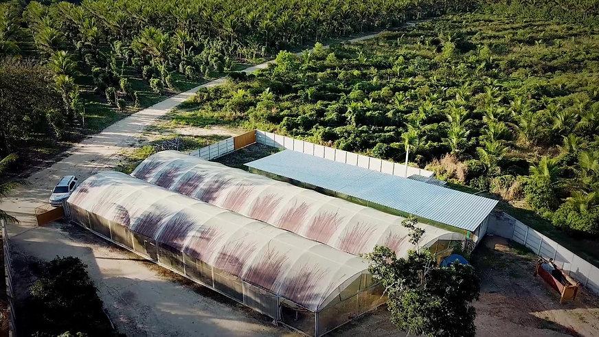 sustainability Sacconi