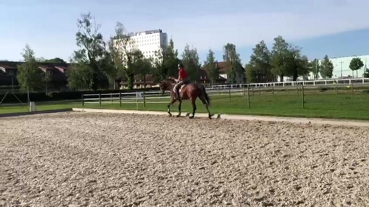 Pferdesport Angelika