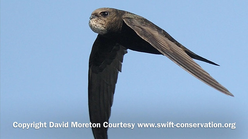 SOS Swifts Video Channel