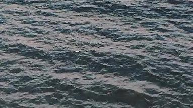 Soaring Over The Sea