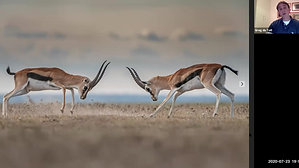 Greg du Toit Serengeti Sojourn